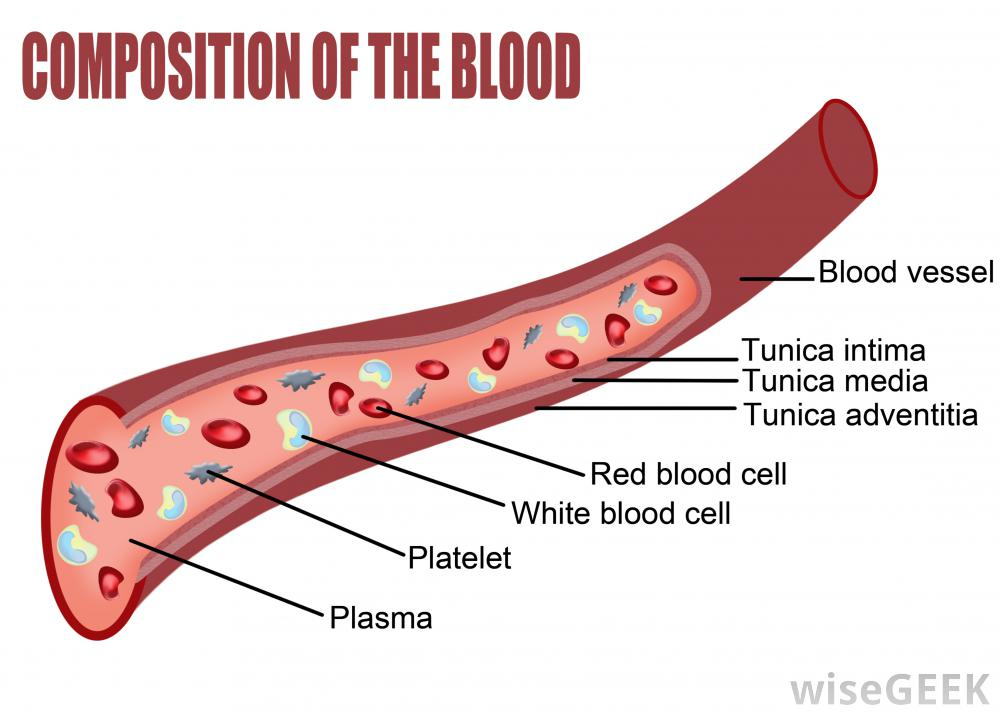 diagram-of-composition-of-the-blood.jpg